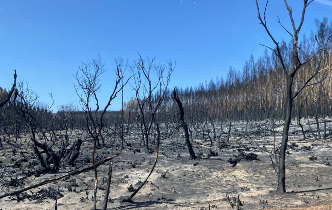Supporting response efforts for Australia's bushfire crisis